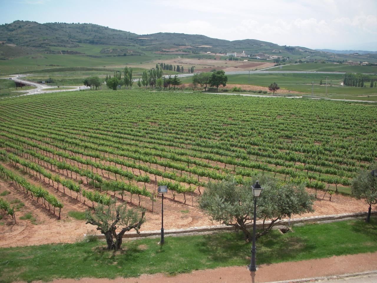 Vignes de Monjardin