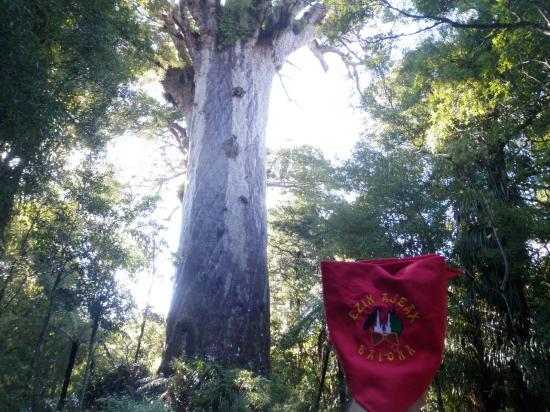 Tāne Mahuta, Waipoua Forest, New Zealand.